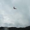 Absolutely Last Flight 2012-46