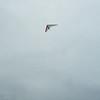 Absolutely Last Flight 2012-44