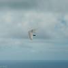 Hang Glider Reunion-18