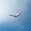 Windblown Gliders-11
