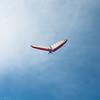 Windblown Gliders-12