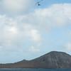 Windblown Gliders-95