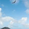 Windblown Gliders-93