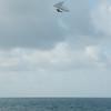Windblown Gliders-98