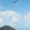 Windblown Gliders-94