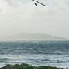 Windblown Gliders-164