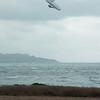 Windblown Gliders-100