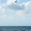 Windblown Gliders-97