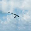 Hang Gliderand Speedwings-19