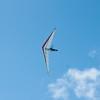 Hang Gliderand Speedwings-16