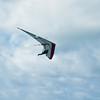 Hang Gliderand Speedwings-20