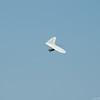 Flying Weather-103