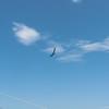 Summer Flying-270