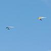 Summer Flying-267