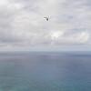Strutted Glider 14.5-31