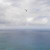 Strutted Glider 14.5-32