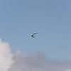 Srutted Glider 14.5-54