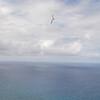 Strutted Glider 14.5-33