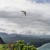 Srutted Glider 14.5-65