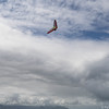 Srutted Glider 14.5-66