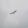 Freedom Flying-23