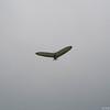 Freedom Flying-16