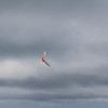 Fine Flying-67