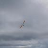 Fine Flying-65