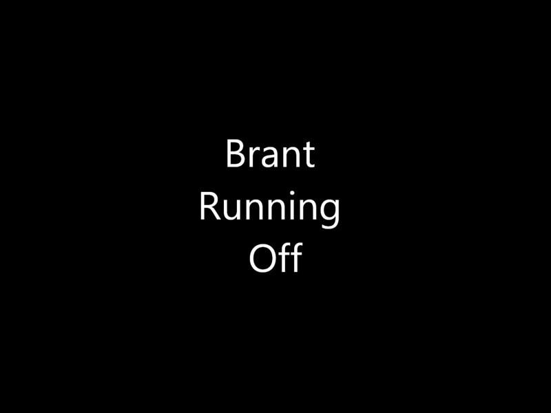 Brant Running Off