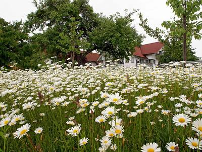Nonnenhorn 22-05-14 (1)
