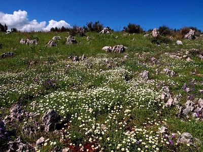 Agios Spiridon 30-04-14 (46)