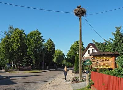 Bialowieza 27-05-18 (1)