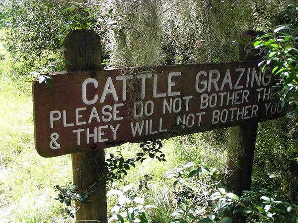 beware grazing cattle