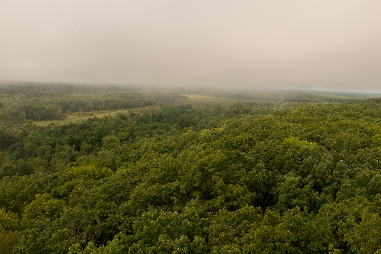 Foggy view from the tower.