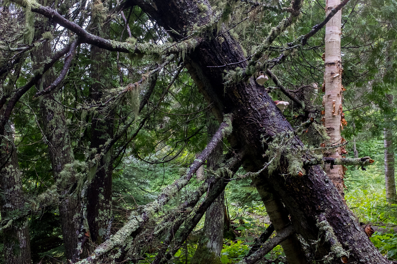 I wasn't ready for a forest this damp, and green. There was moss, algea and lichen everywhere.