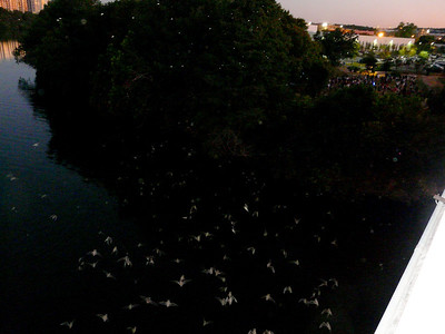 every night... 1.5 million of them take to the air...  no bugs in Austin...