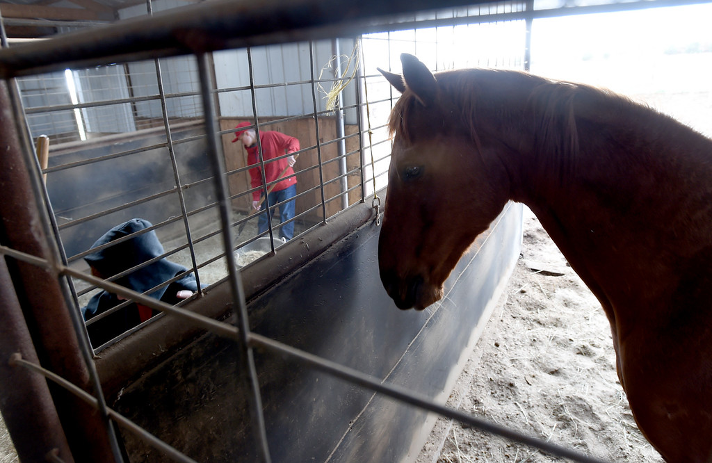. One of the ranch horses keeps an eye on Timmy Kutschner, left, and Jaedyn Adler, as they clean out a stall. The organization, Happiness Through Horses, helps kids gain confidence by working with horses at Rockin Moon Ranch near Ft. Lupton.  Cliff Grassmick / Staff Photographer/ March 27, 2018