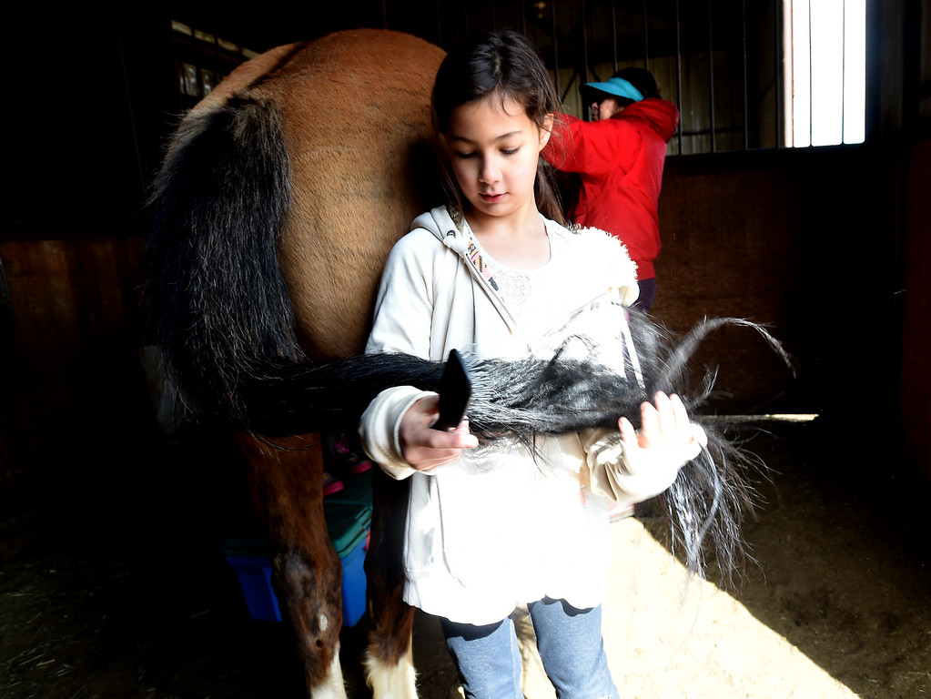 . Lexee Ingram takes special care when brushing and conditioning one of the horse tails.  The organization, Happiness Through Horses, helps kids gain confidence by working with horses at Rockin Moon Ranch near Ft. Lupton.  Cliff Grassmick / Staff Photographer/ March 27, 2018