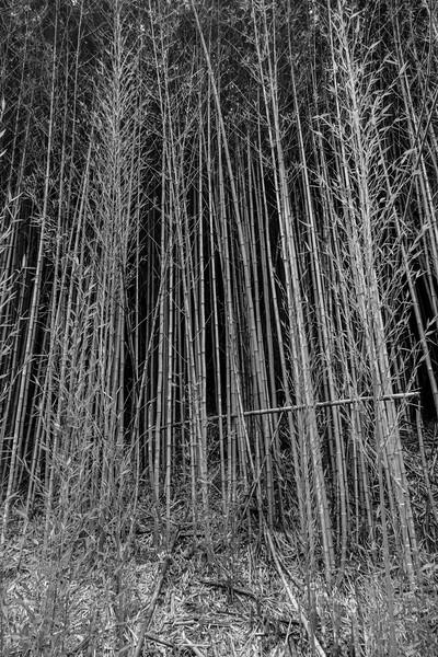 Bamboo on Tinamu Lodge Road