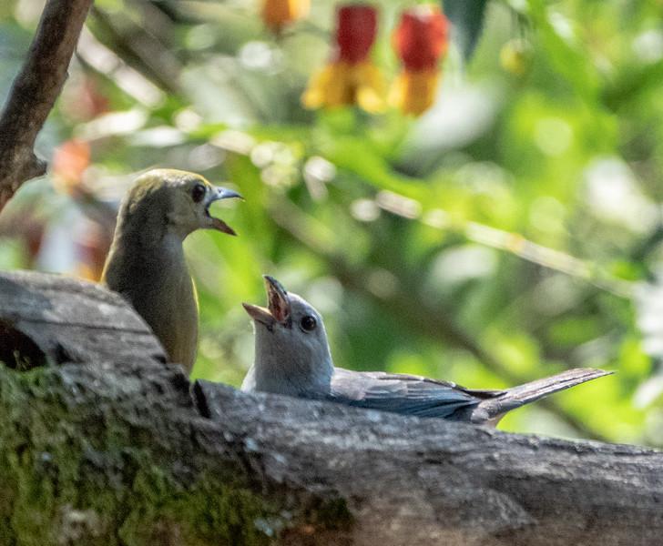 Dispute at the feeders