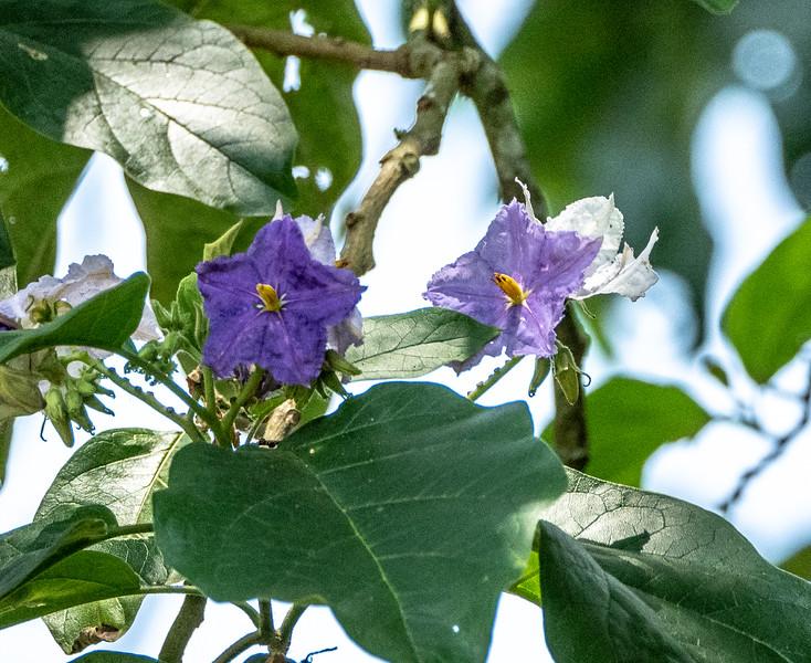 Blooms at Tinamu Lodge