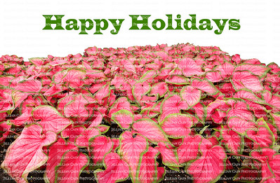 Happy Holidays written above a large collection of red and green caladiums