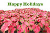 Happy Holidays written above a large collection of red and green caladiums.