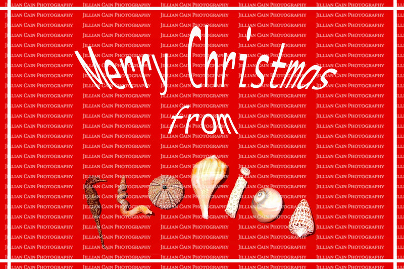 Merry Christmas card from Florida using sea shells to spell out F L O R I D A