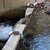 Baisman Run  V-notch weir stream flow sampling station at Ivy Hill Road near Oregon Ridge County Park