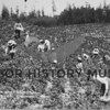 Mr. and Mrs. Samuelson and their 12 children picking strawberries on their farm in Cromwell - Sunny Hill Farm.  Water tank in background was for irrigation and swimming only.  At this time, 1912, strawberries was only cash crop in Hales Pass area.  Source: Mrs. C.F. McCormick.