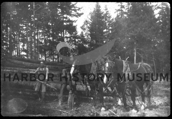 Logging with horses in Rosedale