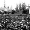 Peter Olson farm, potato farm in foreground, tower on right,apple trees between; spindly fir trees in background.
