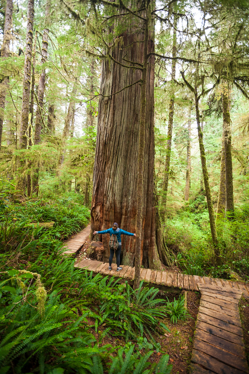 Hiking the Rainforest Trail in Pacific Rim National Park, Vancouver Island,  British Columbia.