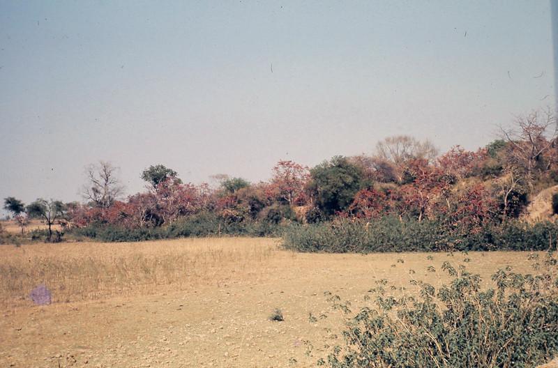 Hamirpur 18